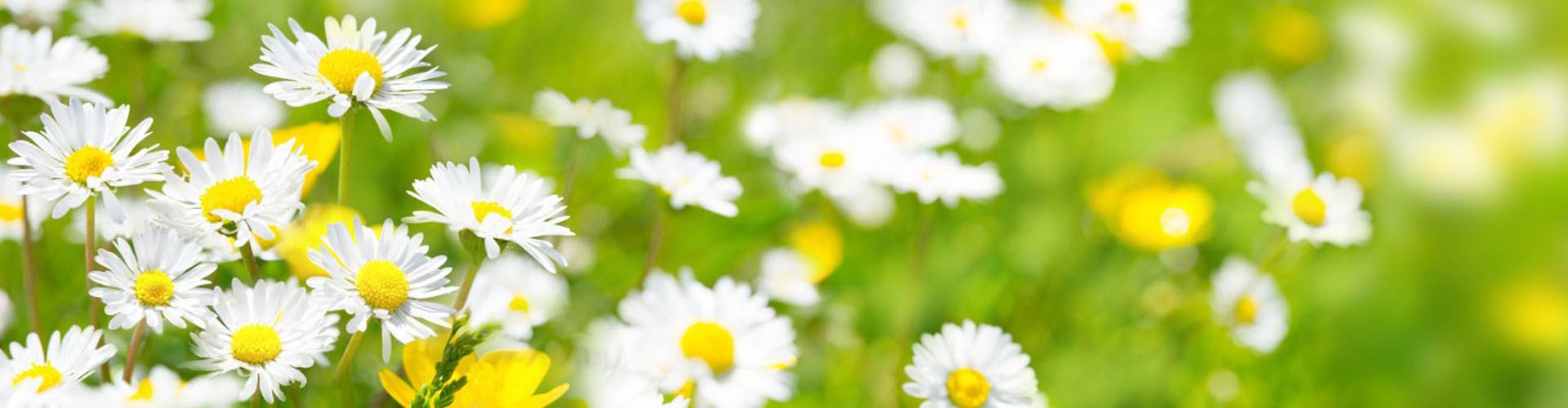 Titelseite Blumenwiese © AK, AK